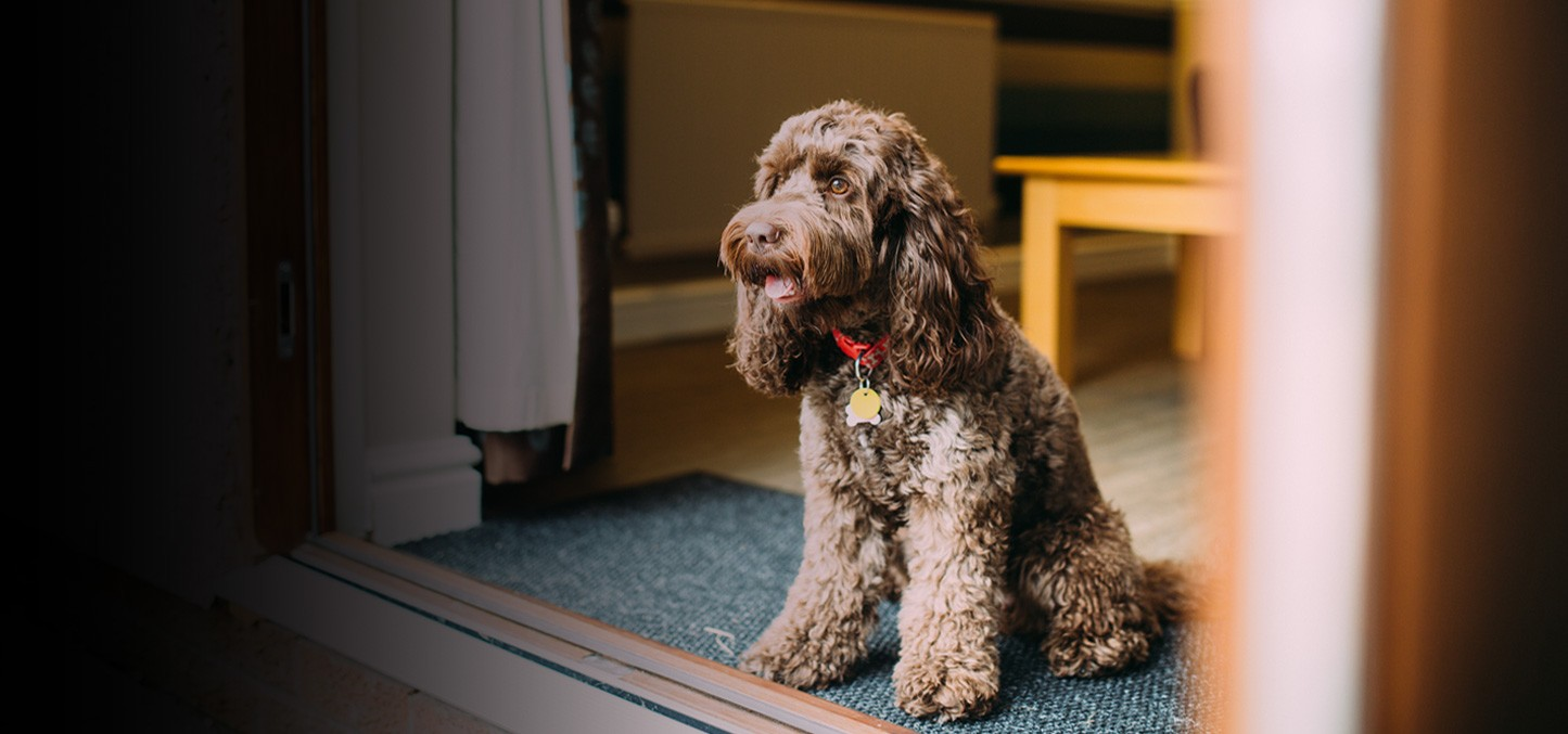 Awe Inspiring Dog Friendly Holiday Cottages Ribby Hall Village Home Interior And Landscaping Elinuenasavecom